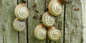 Escargots Terrestres