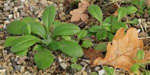 Jeunes Plantes